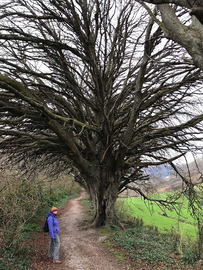 Walking in the woods in The Salcombe area, Devon